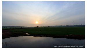 Morning at paddy field